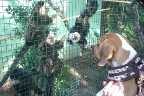 11-10-23-luna-im-zoo-fileminimizer5CAD3C79-CE50-FD24-E71E-48EE74E76098.jpg